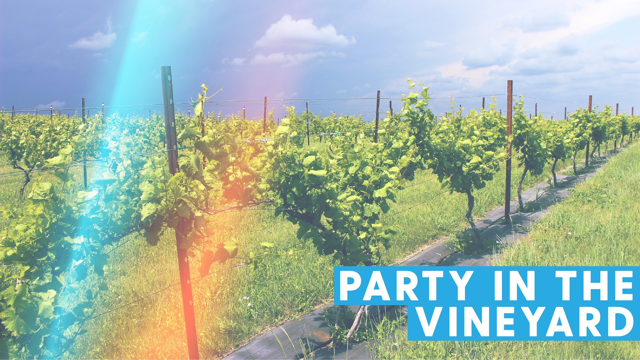 Party in the Vineyard, Sept 4, 2019