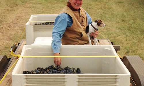 Remembering Nelle, Vice President of Vineyard Security